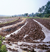 A water-logged field in Tuanlin China