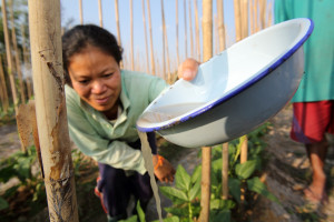 Woman watering long beans with river water in Phonthan Village, Phonhong District, Vientiane Province, Laos.